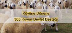 Köyüne Dönene 300 Koyun Devlet Desteği