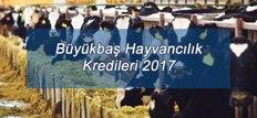 Büyükbaş Hayvancılık Kredileri 2017