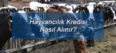 Hayvancılık Kredisi Nasıl Alınır?