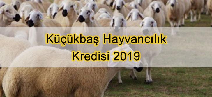 Küçükbaş Hayvancılık Kredisi 2019